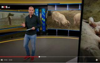 Jeugdjounaal over het Familievarken